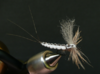 EXTENDED MAYFLY WHITE