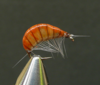 GAMMARUS ORANGE